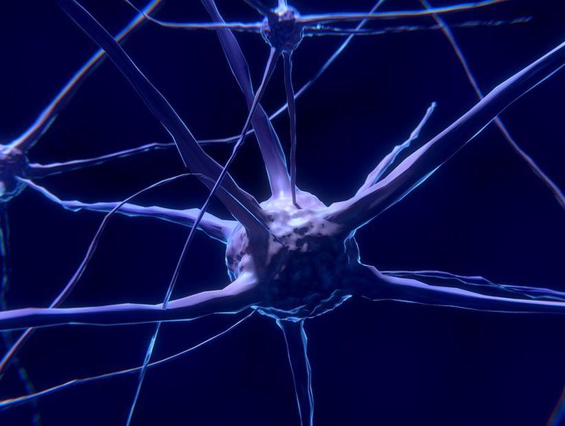 Menor producción de energía neuronal hace al cerebro más proclive a enfermar con la edad